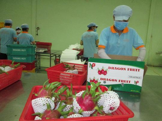 Xuất khẩu rau quả còn quá khiêm tốn Ảnh 1
