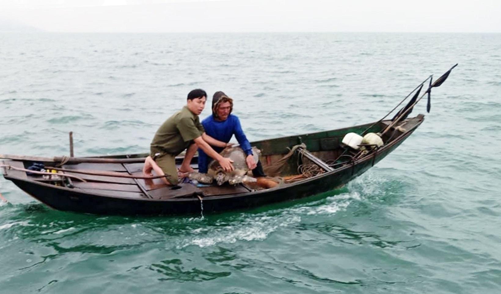 Hà Tĩnh: Rùa biển nặng gần 40kg được thả về môi trường tự nhiên Ảnh 1