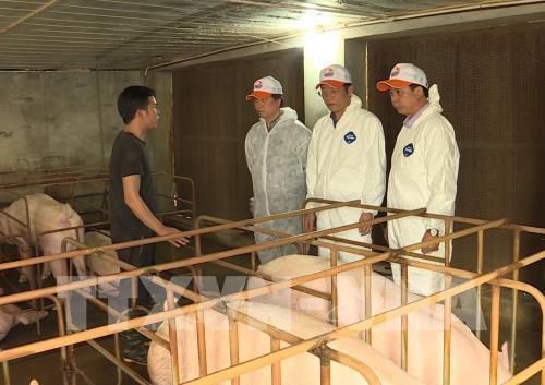FAO: Cần cảnh giác cao độ với dịch tả lợn châu Phi tại Việt Nam Ảnh 1