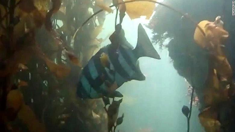 Chú cá Nhật Bản bơi sang tận Mỹ nhờ…sóng thần ảnh 1