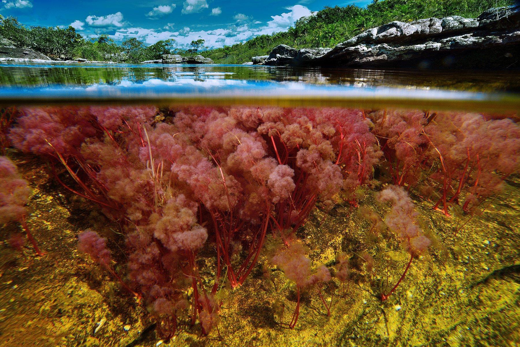 Dòng sông đẹp nhất thế giới 'chảy xuống từ thiên đường' Ảnh 4