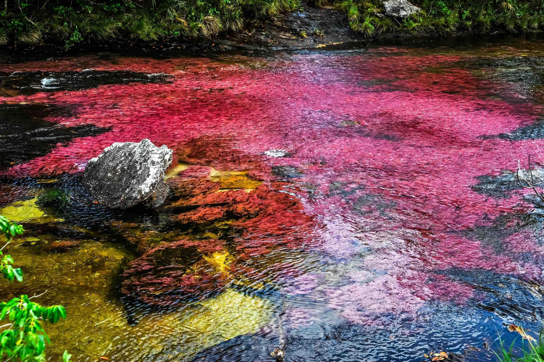 Dòng sông đẹp nhất thế giới 'chảy xuống từ thiên đường' Ảnh 1