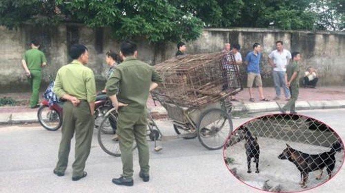 Đàn chó cắn tử vong bé trai 7 tuổi ở Hưng Yên được xử lý thế nào? Ảnh 1
