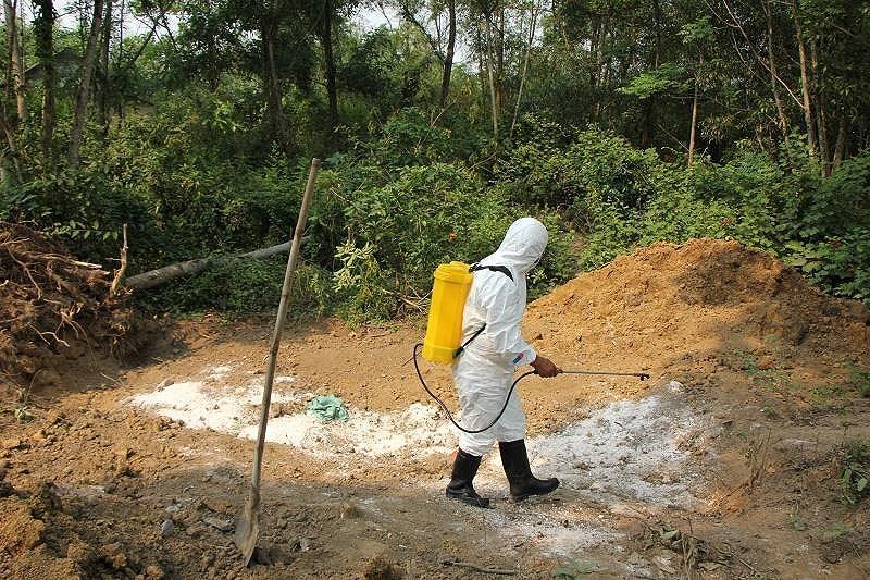 Phát hiện thêm ổ dịch tả heo châu Phi tại Thừa Thiên - Huế Ảnh 2