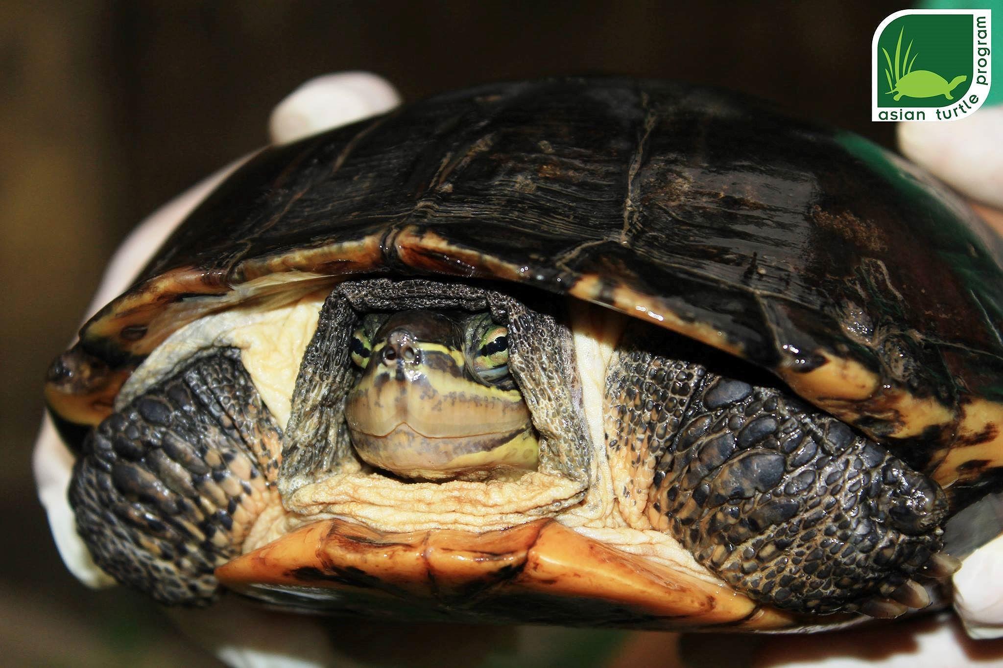 Hồng Kông bàn giao một cá thể rùa quý hiếm cho Việt Nam Ảnh 1
