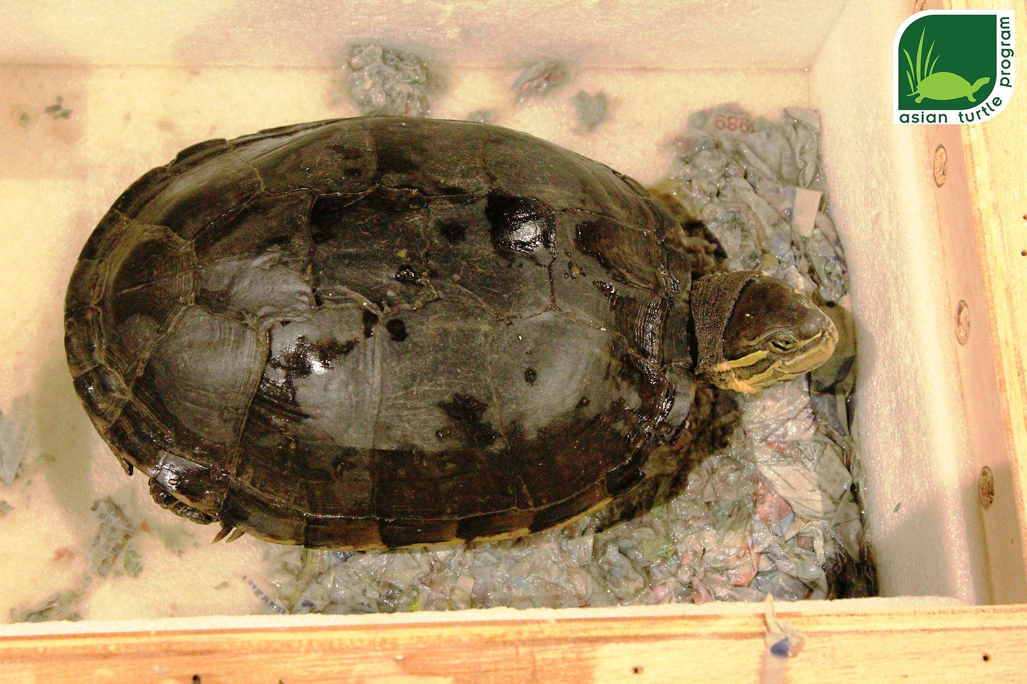 Hồng Kông bàn giao một cá thể rùa quý hiếm cho Việt Nam Ảnh 2