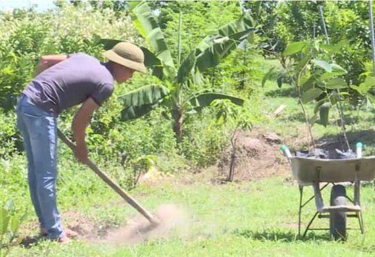Người dân Bình Phước đổ xô trồng mít Thái vì lãi 'khủng' Ảnh 1