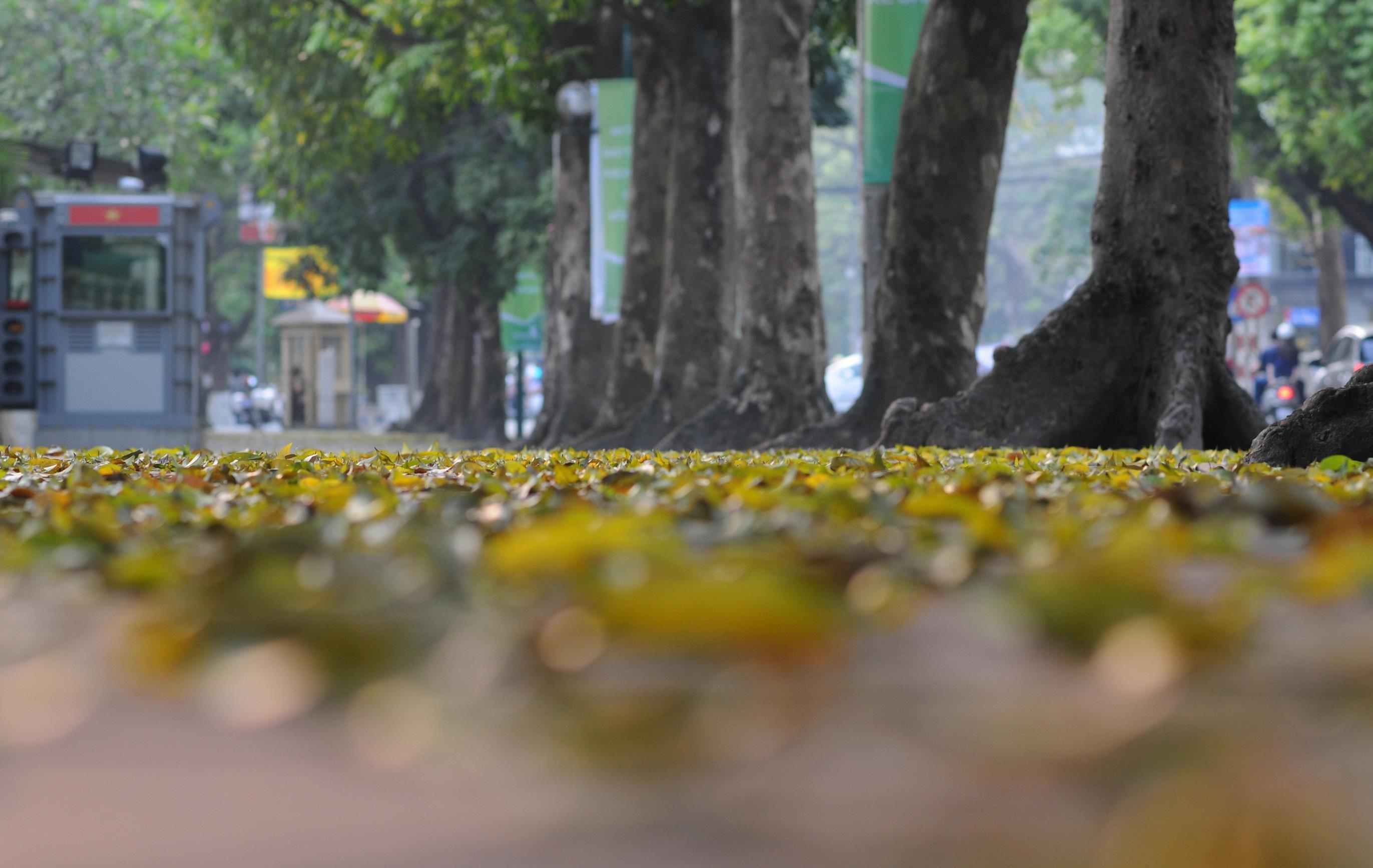 Đám đông đổ đến con đường lãng mạn nhất Hà Nội đón mùa sấu thay lá Ảnh 10