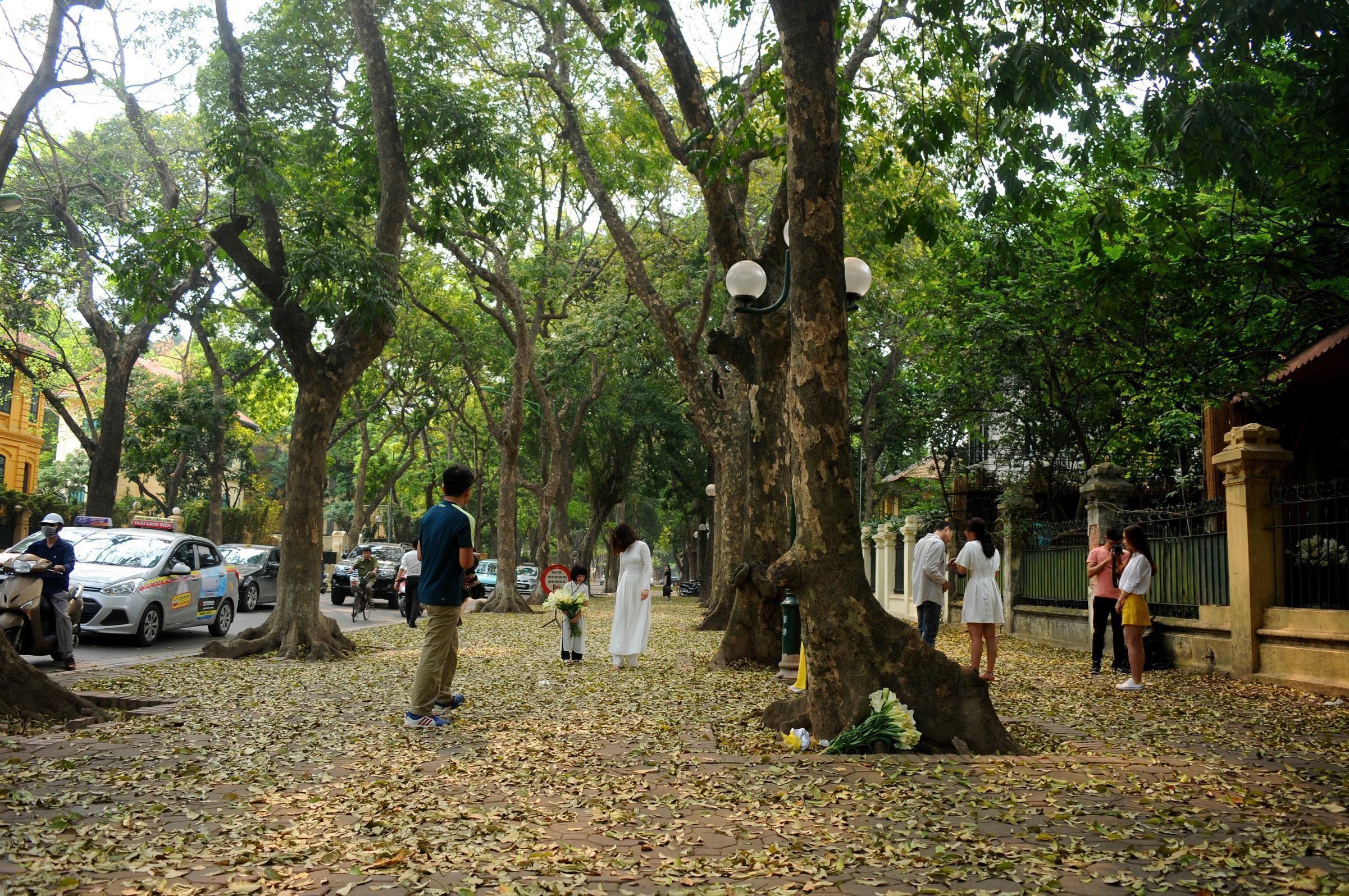 Đám đông đổ đến con đường lãng mạn nhất Hà Nội đón mùa sấu thay lá Ảnh 16