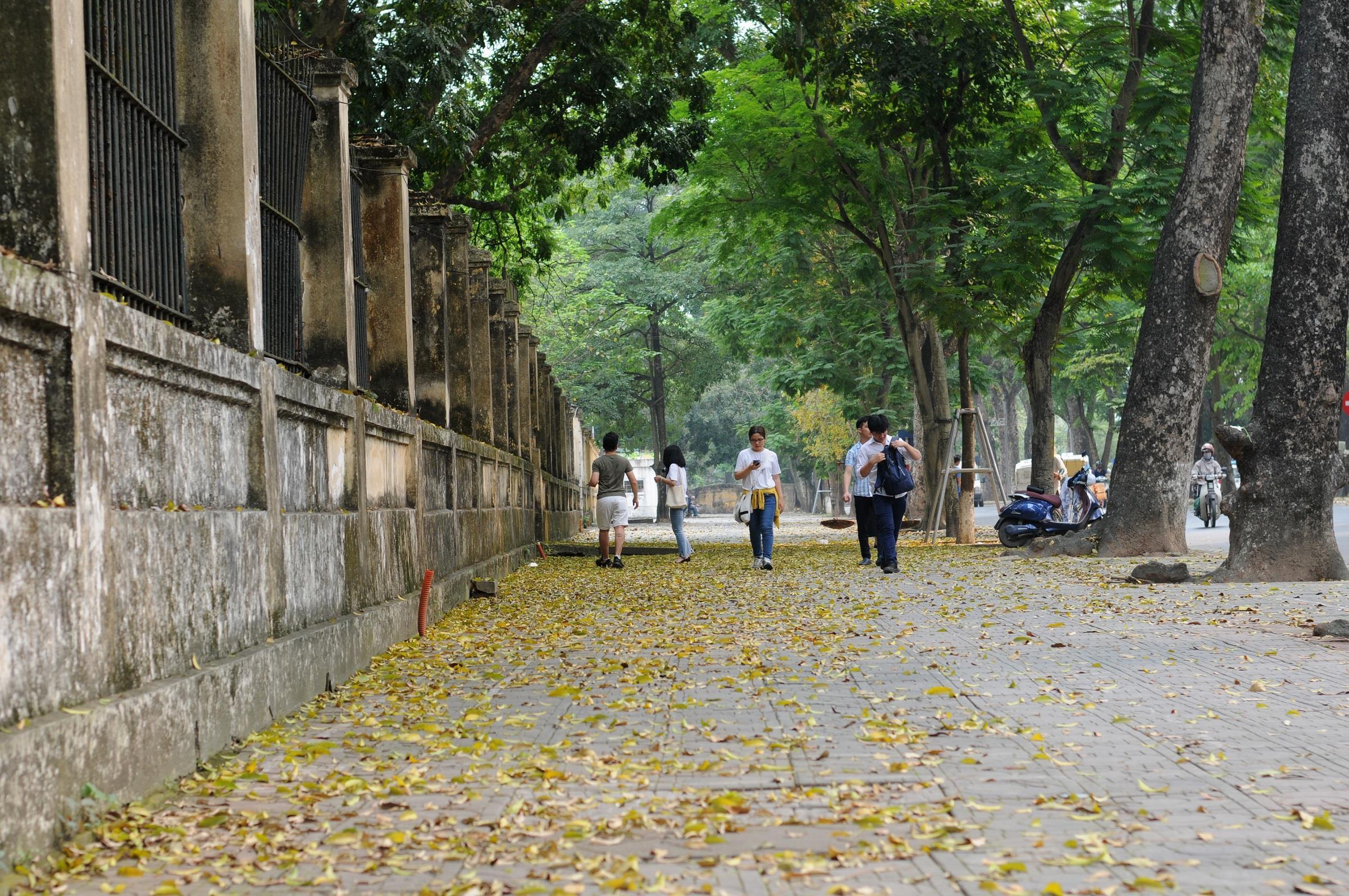 Đám đông đổ đến con đường lãng mạn nhất Hà Nội đón mùa sấu thay lá Ảnh 12