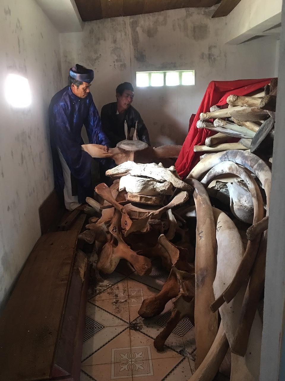 Quảng Ngãi: 14 tỷ đồng phục dựng bộ xương cá voi Ảnh 1