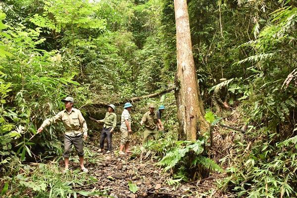 Sơn La: Hỗ trợ hơn 8.000 tấn gạo cho đồng bào dân tộc trồng, chăm sóc, bảo vệ rừng Ảnh 1