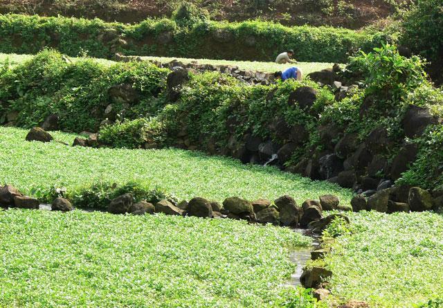 Khởi động tour du lịch thăm giếng cổ Gio An và vườn sâm Bố Chính Ảnh 2