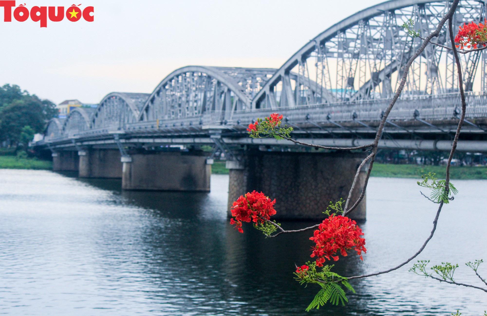 Đất trời xứ Huế đẹp rực rỡ trong mùa phượng vĩ nở hoa Ảnh 18