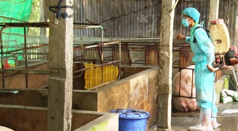 Thêm tỉnh Kiên Giang xuất hiện dịch tả heo châu Phi Ảnh 2