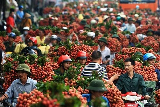Trung Quốc chỉ mua trái cây Việt Nam… không có lá? Ảnh 1
