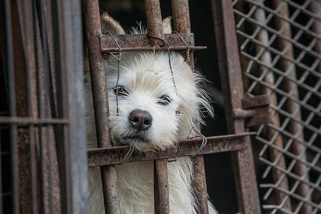 Chợ thịt chó nổi tiếng Hàn Quốc chính thức đóng cửa Ảnh 6