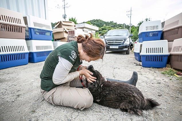 Chợ thịt chó nổi tiếng Hàn Quốc chính thức đóng cửa Ảnh 8