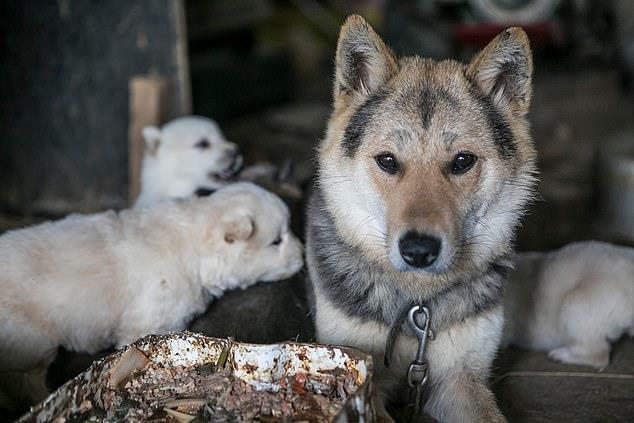 Chợ thịt chó nổi tiếng Hàn Quốc chính thức đóng cửa Ảnh 1