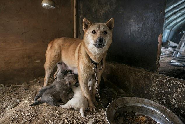Chợ thịt chó nổi tiếng Hàn Quốc chính thức đóng cửa Ảnh 4