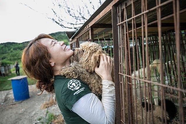 Chợ thịt chó nổi tiếng Hàn Quốc chính thức đóng cửa Ảnh 10