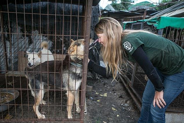 Chợ thịt chó nổi tiếng Hàn Quốc chính thức đóng cửa Ảnh 7
