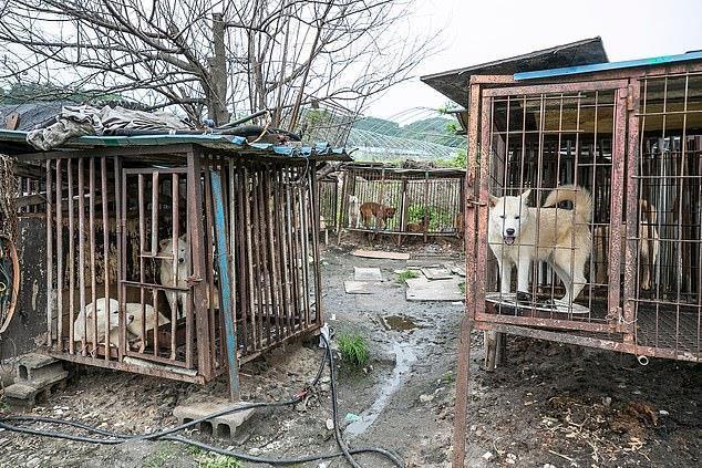 Chợ thịt chó nổi tiếng Hàn Quốc chính thức đóng cửa Ảnh 5