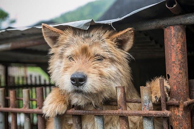 Chợ thịt chó nổi tiếng Hàn Quốc chính thức đóng cửa Ảnh 2