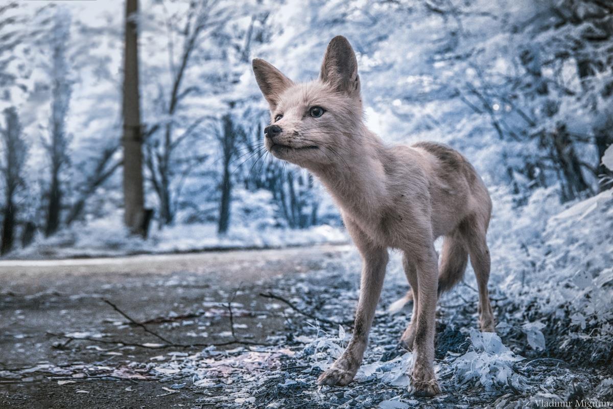 Vùng đất chết Chernobyl hóa xứ thần tiên qua ống kính nhiếp ảnh gia Ảnh 1