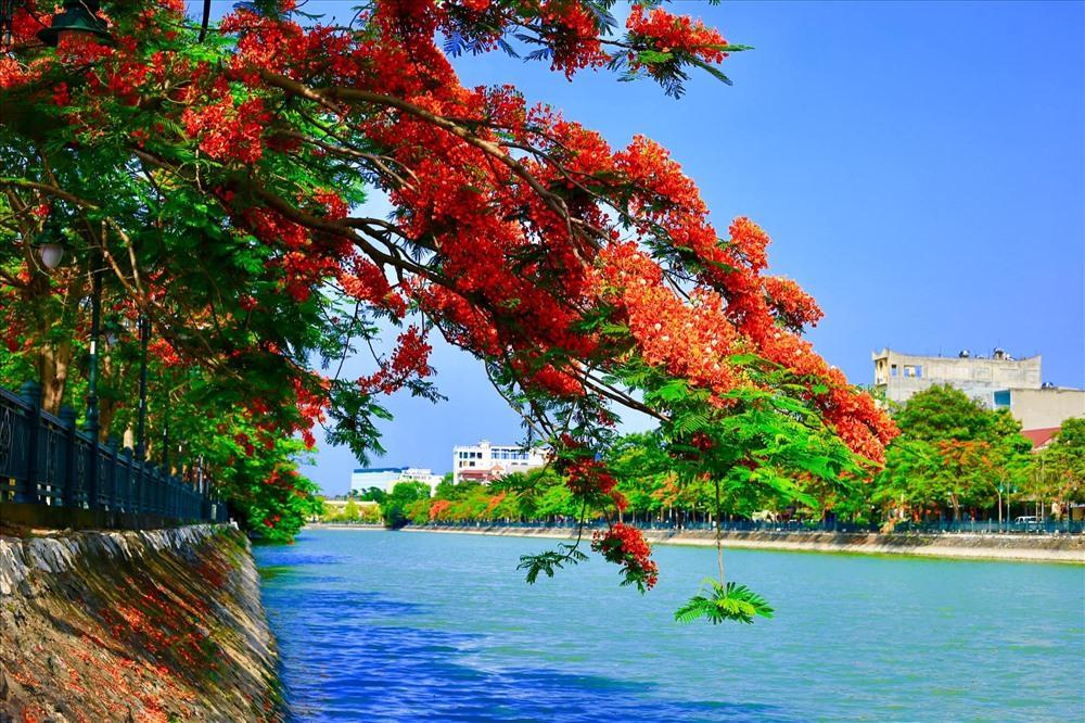 Người dân Hải Phòng đề xuất thả thêm thiên nga trong hồ Tam Bạc Ảnh 2