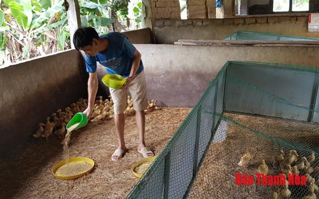 Chuyển đổi cơ cấu vật nuôi sau dịch tả lợn Châu Phi Ảnh 2