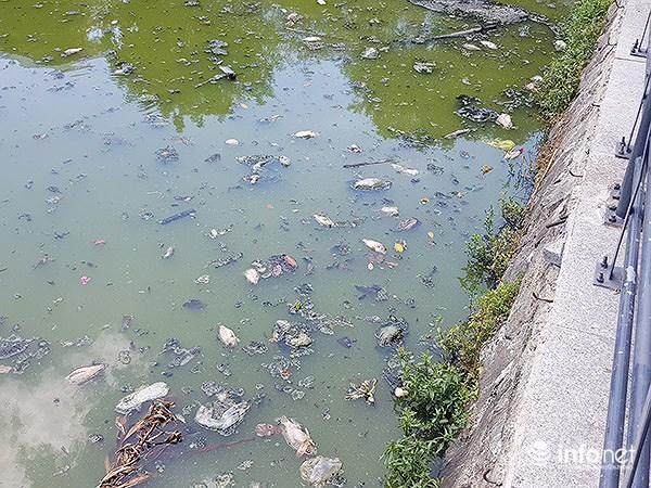 Cá chết lềnh bềnh ở 2 hồ Đà Nẵng từng từ chối ông Dũng 'lò vôi' xử lý ô nhiễm Ảnh 9
