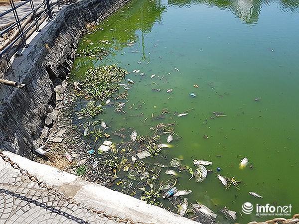 Cá chết lềnh bềnh ở 2 hồ Đà Nẵng từng từ chối ông Dũng 'lò vôi' xử lý ô nhiễm Ảnh 1