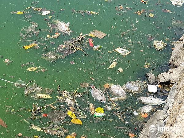 Cá chết lềnh bềnh ở 2 hồ Đà Nẵng từng từ chối ông Dũng 'lò vôi' xử lý ô nhiễm Ảnh 2