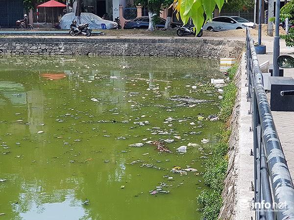 Cá chết lềnh bềnh ở 2 hồ Đà Nẵng từng từ chối ông Dũng 'lò vôi' xử lý ô nhiễm Ảnh 6