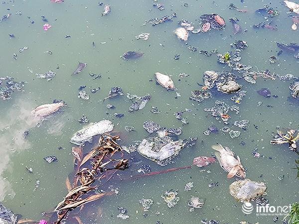 Cá chết lềnh bềnh ở 2 hồ Đà Nẵng từng từ chối ông Dũng 'lò vôi' xử lý ô nhiễm Ảnh 8