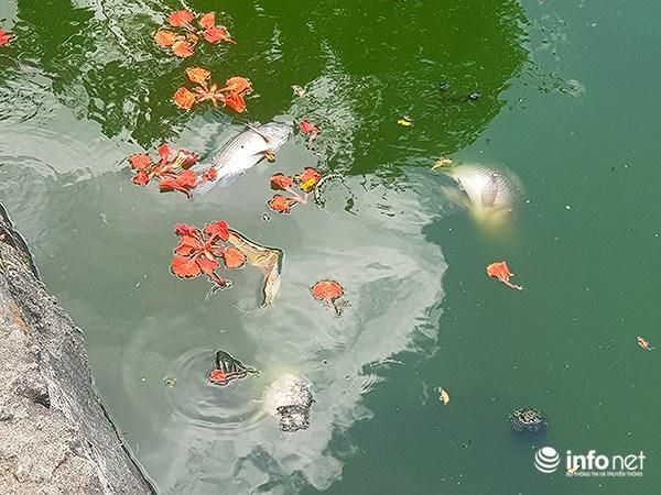Cá chết lềnh bềnh ở 2 hồ Đà Nẵng từng từ chối ông Dũng 'lò vôi' xử lý ô nhiễm Ảnh 3