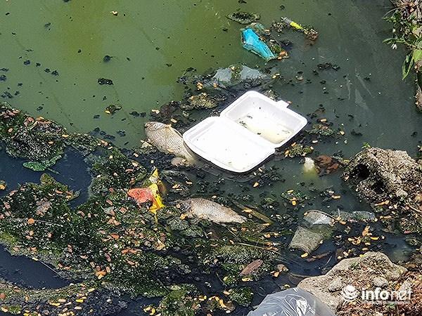 Cá chết lềnh bềnh ở 2 hồ Đà Nẵng từng từ chối ông Dũng 'lò vôi' xử lý ô nhiễm Ảnh 7