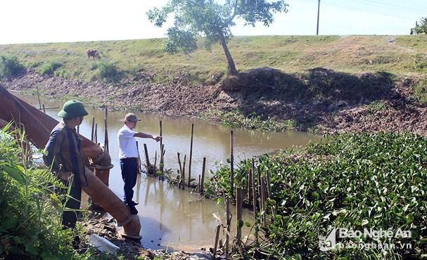 Gần 1.000 ha lúa hè thu ở Hưng Nguyên có nguy cơ chết cháy Ảnh 3