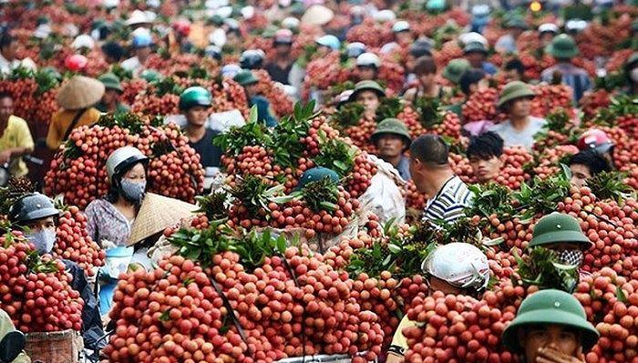 Thương nhân Trung Quốc ùn ùn tới vựa vải thiều lớn nhất Việt Nam Ảnh 1
