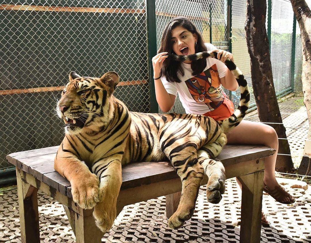 Tới Thái Lan, ghé nơi hổ đi lại nhởn nhơ trước mặt du khách Ảnh 6