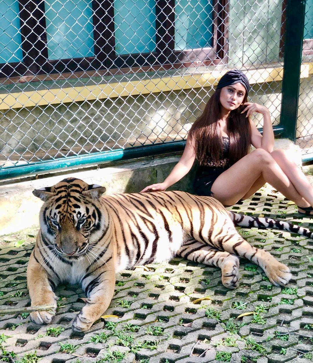 Tới Thái Lan, ghé nơi hổ đi lại nhởn nhơ trước mặt du khách Ảnh 1