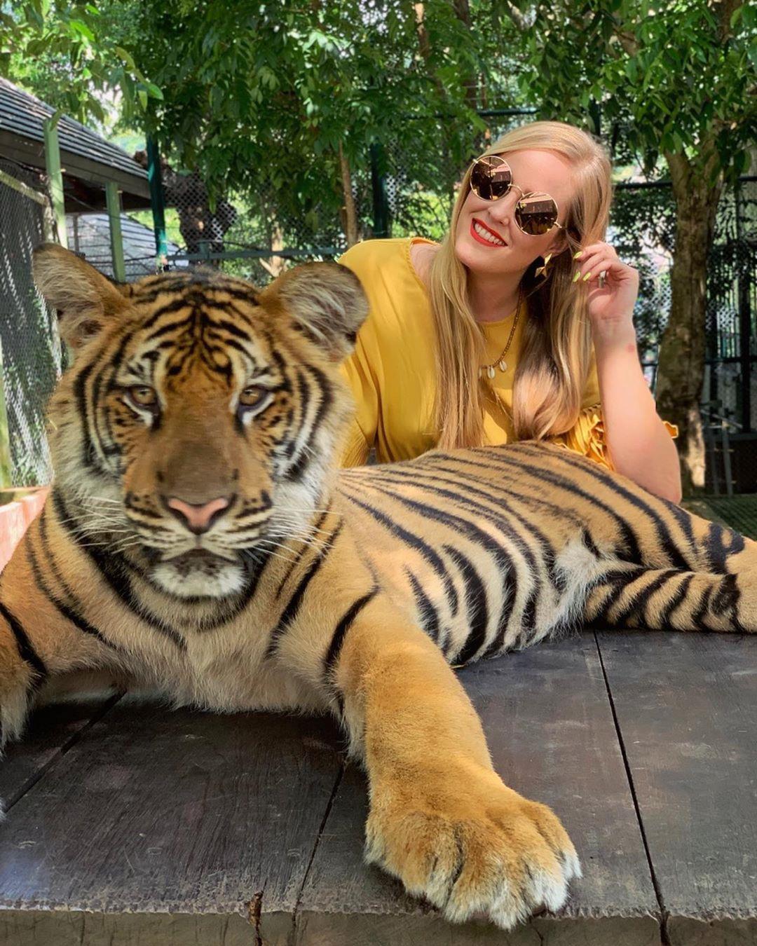 Tới Thái Lan, ghé nơi hổ đi lại nhởn nhơ trước mặt du khách Ảnh 4
