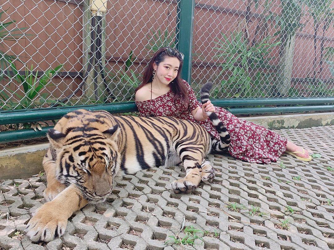Tới Thái Lan, ghé nơi hổ đi lại nhởn nhơ trước mặt du khách Ảnh 12