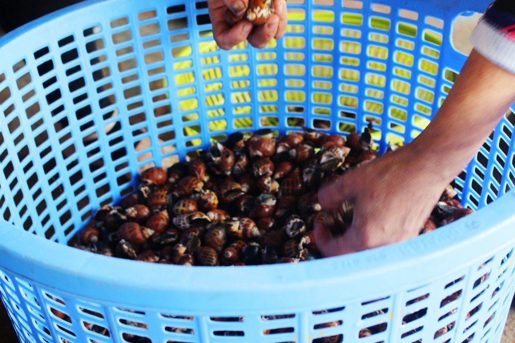 'Phượt' Cần Giờ, ghé chợ Đồng Hòa thưởng thức món ngon từ biển Ảnh 3