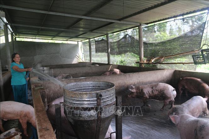Hai tỉnh mới phát hiện dịch tả lợn châu Phi khẩn trương dập dịch Ảnh 1