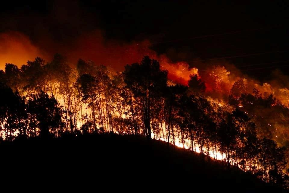 Đốt lửa lấy mật ong gây cháy rừng, ba nông dân bị bắt giam Ảnh 1