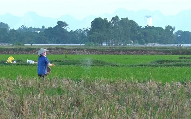 Giải quyết tình trạng nông dân tỉnh Hà Nam bỏ ruộng Ảnh 1