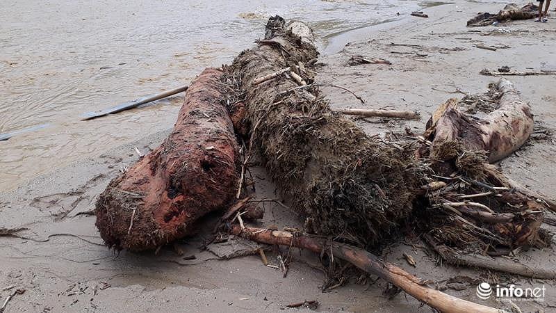Thanh Hóa: Sau lũ dữ, bản Sa Ná lại ngập trong... gỗ Ảnh 10