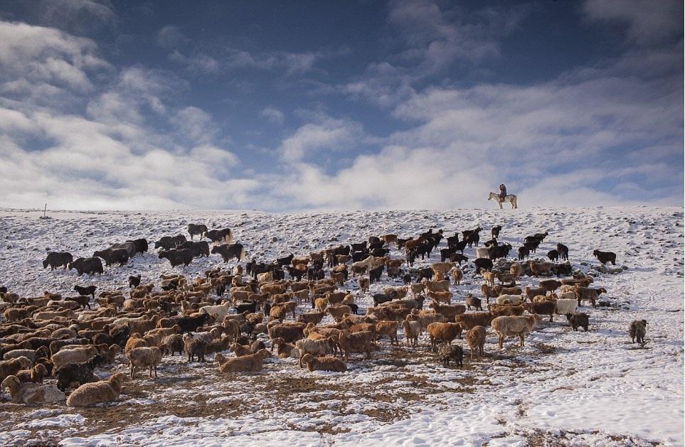 Cuộc sống của những người thợ săn bằng đại bàng ở miền Tây Mông Cổ (Phần I) Ảnh 7